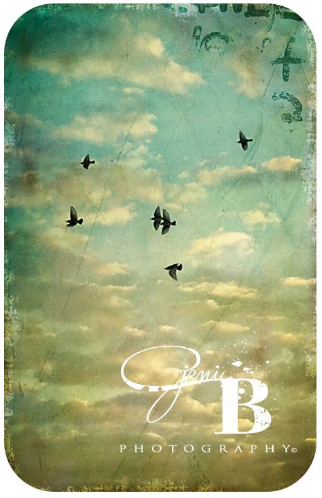 Birdsflyrounded